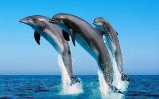 Дельфин сонник миллера