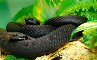 Видеть во сне маленьких змей сонник