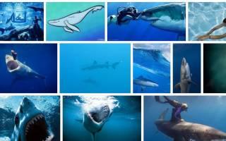Видеть во сне акулу в воде сонник