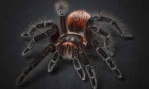 Сонник к чему снятся пауки