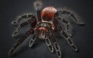 К чему снится много пауков женщине сонник