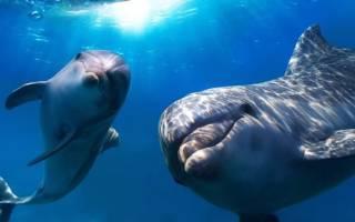 К чему снится дельфин женщине сонник