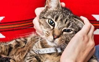К чему снится гладить кошку сонник