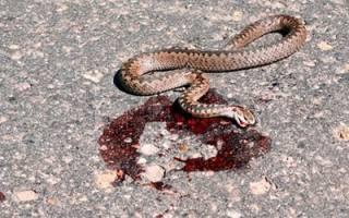 К чему снится мертвая змея сонник