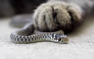 Сонник убивать змей много