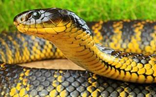 К чему снится убегать от змеи сонник
