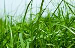 К чему снится трава сонник