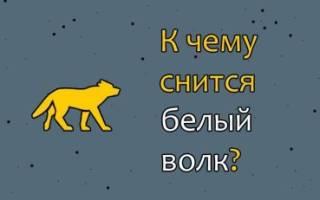 Видеть во сне белого волка сонник