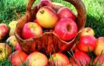 Большие яблоки во сне сонник