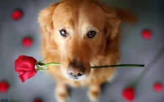 К чему снится собака женщине незамужней сонник