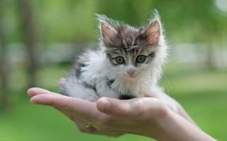 К чему снится убить кошку во сне сонник