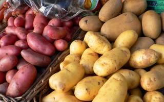 К чему сниться картошка во сне сонник