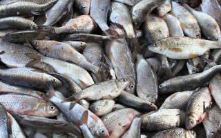 Много рыбы во сне для женщины сонник