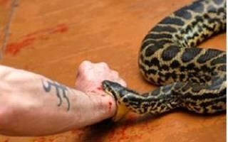 К чему снится укус змеи в руку сонник