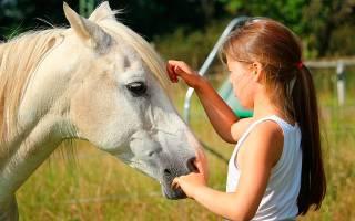 Сонник белая лошадь во сне видеть