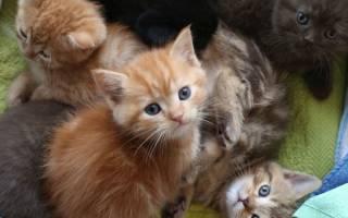 Видеть во сне котят маленьких с кошкой сонник