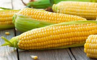 К чему снится есть кукурузу сонник