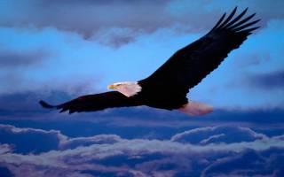 К чему снится белый орел сонник