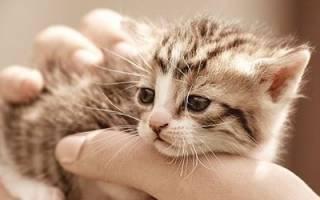 К чему снится спасение котенка сонник