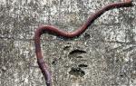 К чему снятся червяки сонник