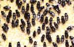 К чему снится рой мух в доме сонник