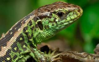 К чему снятся змеи и ящерицы сонник