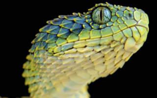 Во сне оторвать голову змее сонник