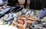 К чему снится ловить рыбу сонник