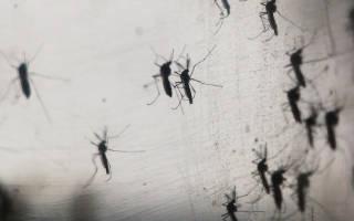 К чему снится большой комар сонник