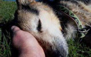 К чему снится собака которая давно умерла сонник