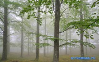 К чему снится дерево сонник