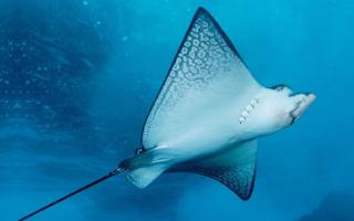К чему снится большая рыба в воде сонник