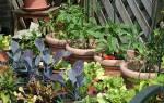 Видеть во сне огород сонник