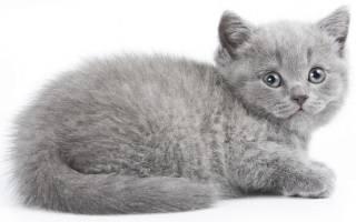 К чему снится маленький котенок во сне сонник