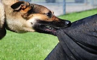 К чему снится собака кусает за ногу сонник