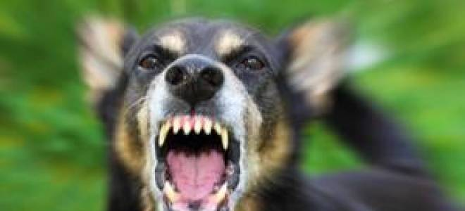 К чему снится укус собаки за ногу сонник