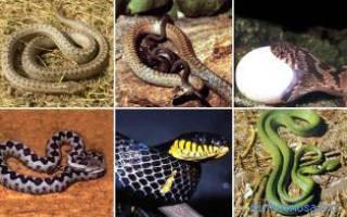 К чему снятся змеи женщине сонник ванги