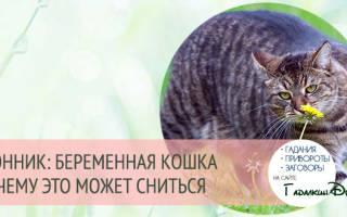 К чему снится беременная кошка девушке сонник