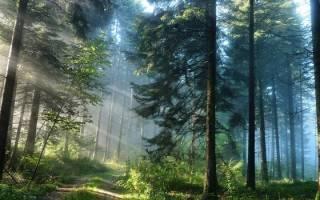Видеть во сне много грибов в лесу сонник