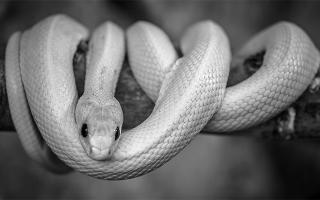 К чему снится белая змея в доме сонник