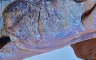 Ловить много рыбы во сне сонник