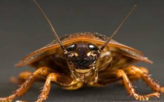 К чему снится убивать тараканов во сне сонник