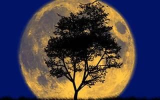 К чему снится большая луна сонник