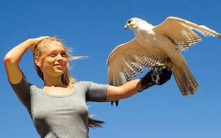 К чему снится большая белая птица сонник