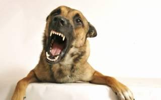 К чему снится укусила собака сонник