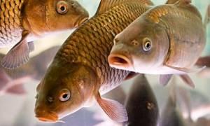 Сонник що означає коли сниться риба