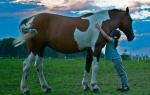 Видеть во сне коня сонник
