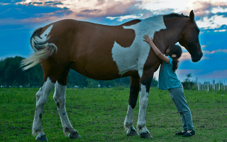 Сонник толкование снов к чему снится лошадь