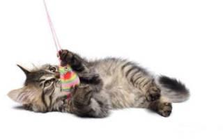 К чему снится серый котенок девушке сонник