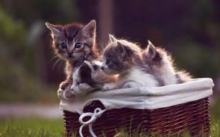 Сон котята маленькие много сонник